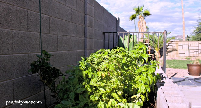 Bell Pepper and Basil Cinder Block Raised Bed