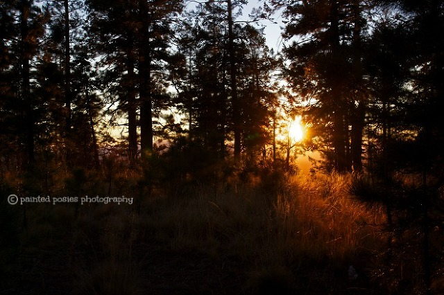 Wandering Eye Wednesday Light Mogollon Rim November 2014