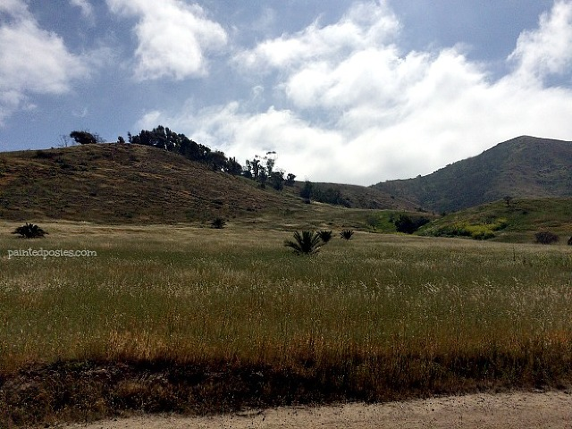 Catalina Island Twin Harbors Grass and Mountains