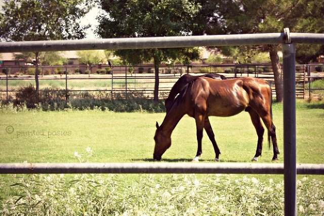 Wandering Eye Wednesday Horse at Pasture June 2015