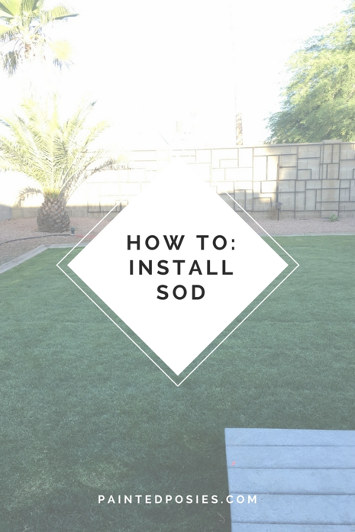 How to Install Sod in the Desert painteposies.com