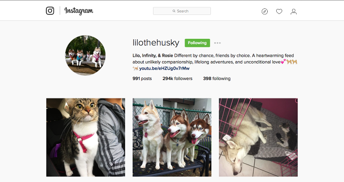 Lilo the Husky Instagram painteposies.com