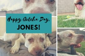Happy 3rd Gotcha Day, Jones! paintedposies.com